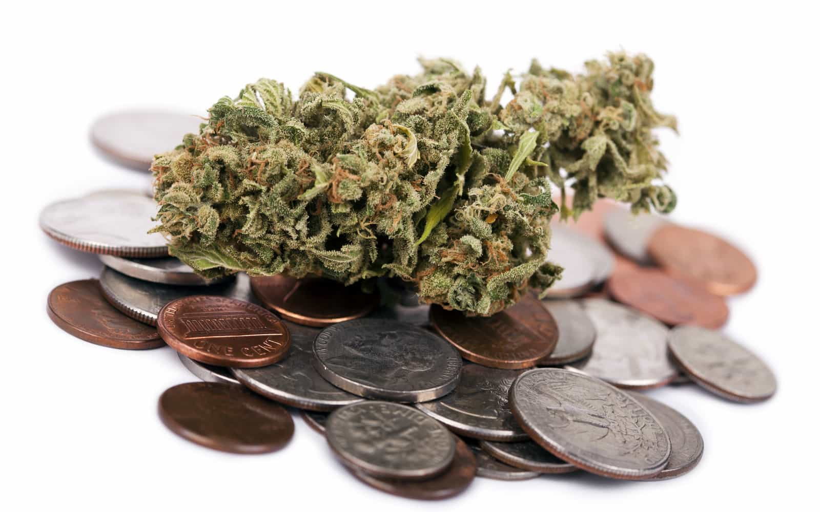 Wholesale Marijuana Prices Continue to Drop - Michael King